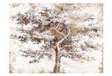 Meadow Wood 1