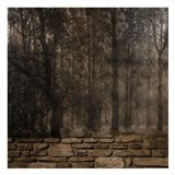Stone Wall Landscape