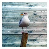 Bay Bird