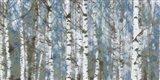 Birch Scape
