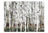 Snow Timber