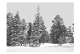 Forest Freeze BW