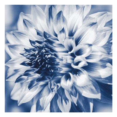 Dahlia Navy 1 Poster by Suzanne Foschino for $18.75 CAD