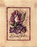 Vintage Sweet Pea