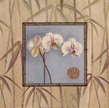 Orchid Spa III