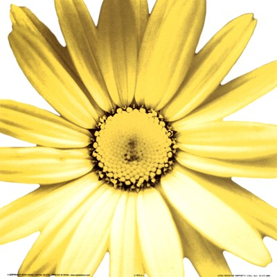 Yellow Daisy Poster by Prades Fabregat for $8.75 CAD