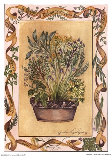 Culinary Herbs Poster by Linda Hutchinson for $7.50 CAD