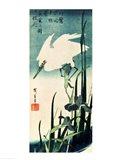 White Heron and Iris