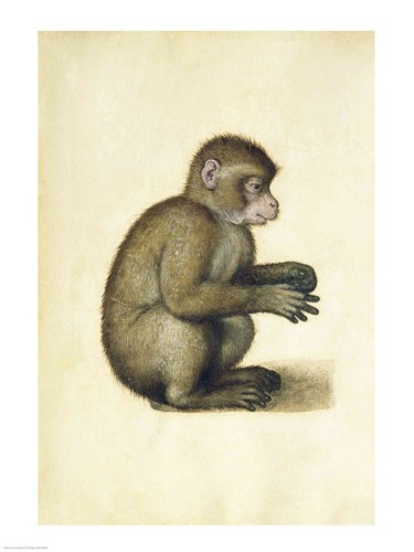 A Monkey Poster by Albrecht Durer for $30.00 CAD