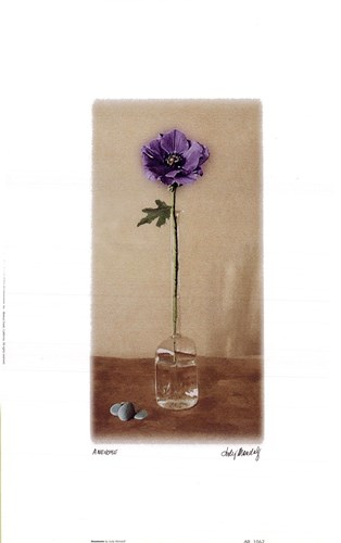 Anemone Poster by Judy Mandolf for $11.25 CAD