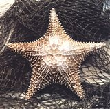 Starfish With Net