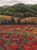 Blue Ridge Poppies