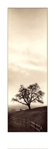 Sentinel Oak Tree Poster by Alan Blaustein for $20.00 CAD