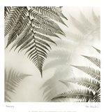 Ferns No. 1