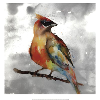 Cardinal Poster by Stephane Fontaine for $40.00 CAD