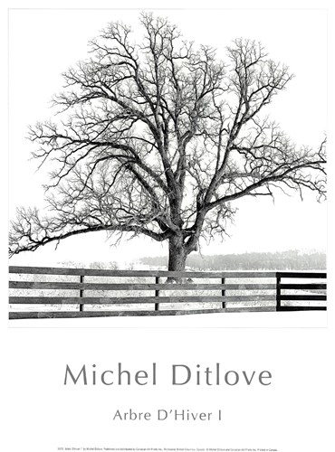 Arbres D'Hivers I Poster by Michel Ditlove for $13.75 CAD