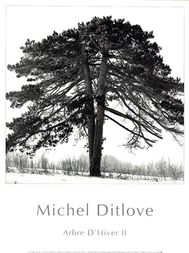 Arbres D'Hivers II Poster by Michel Ditlove for $12.50 CAD