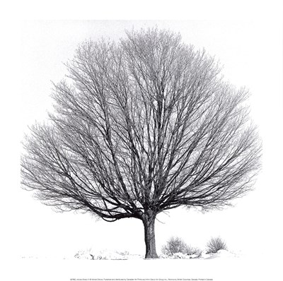 Arbres D'Hivers IV Poster by Michel Ditlove for $18.75 CAD