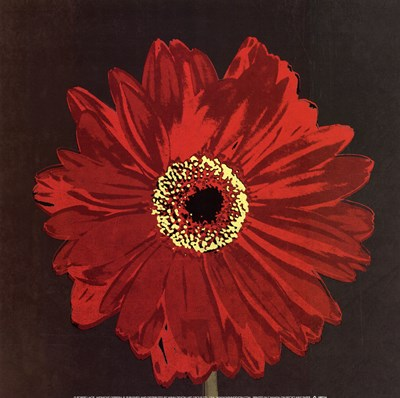 Midnight Gerbera III Poster by Robert Lacie for $18.75 CAD