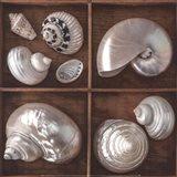 Seashells Treasures I