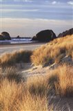 Dune Grass And Beach II