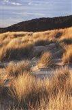Dune Grass Qnd Beach III