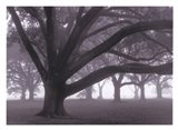 Oak Grove in Fog (black & white)