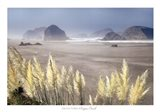 Pampas Beach
