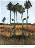 Tall Palms II