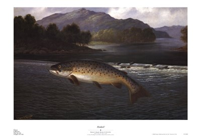 Hooked! Poster by Roland Knight for $35.00 CAD