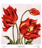Tulips on Silk