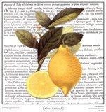 Citrus Edition I