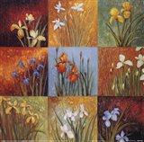 Iris Fields I