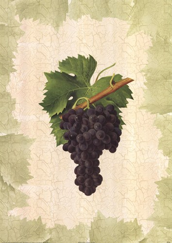 Antique Grapes - Aspiran Poster by Viala for $37.50 CAD