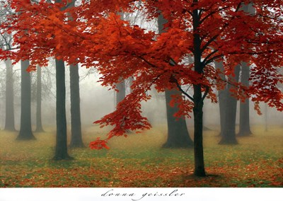 Autumn Mist II Poster by Donna Geissler for $50.00 CAD