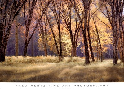 El Capitain Meadow Poster by Fred Mertz for $52.50 CAD