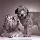 Ruff & Daisy