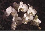 Bountiful Orchids