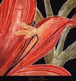 Red Amaryllis With Stem