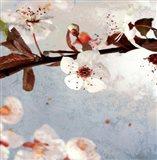 Blossom Morning I