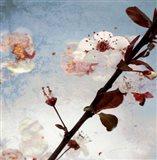 Blossom Morning 2