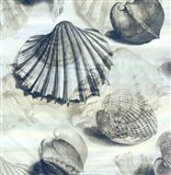 Shell engraving 1