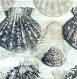 Shell engraving 2