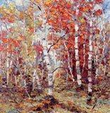 Birch Colors 3