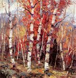 Birch Colors 4