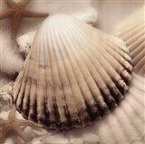 Iridescent Seashell II
