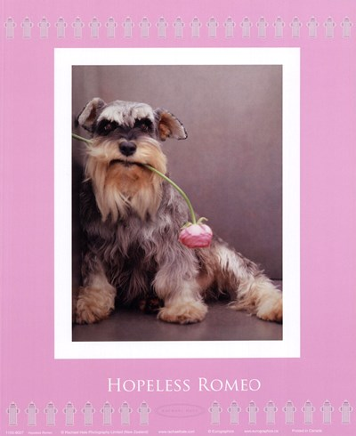 Hopeless Romeo Poster by Rachael Hale for $17.50 CAD