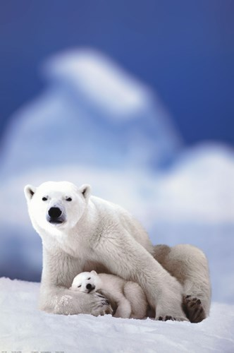 Polar Bear And Baby Poster by Unknown for $26.25 CAD