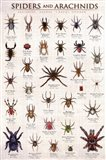 Spiders & Arachnids