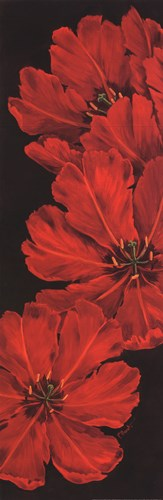 Bella Grande Tulips Poster by Paul Brent for $27.50 CAD
